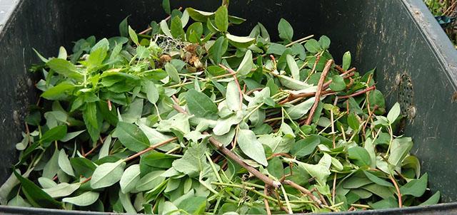 La collecte des déchets verts
