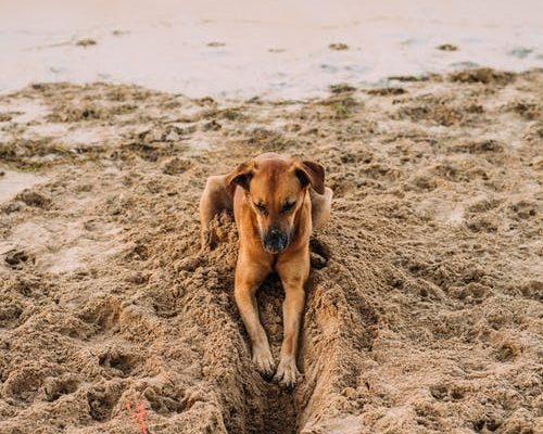 Animaux sur la plage